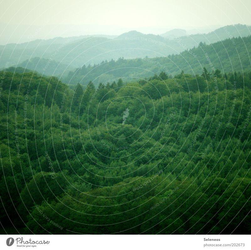 Wer findet das Männlein im Walde? Himmel Natur grün Baum Ferien & Urlaub & Reisen Ferne Wald Freiheit Landschaft Umwelt Ausflug Nebel Klima natürlich Hügel beobachten