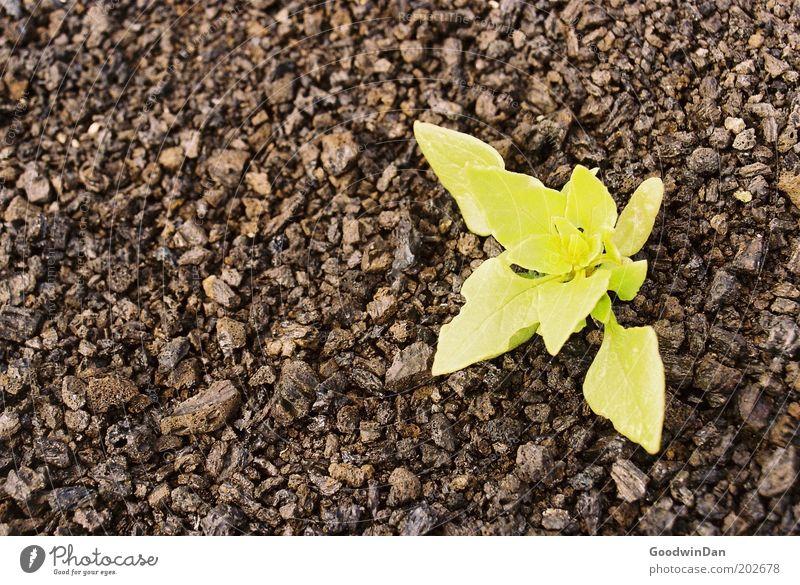 Kontrastprogramm Natur Pflanze gelb Landschaft braun warten Umwelt frei Erde Wachstum Klima Schönes Wetter einzeln Frühlingsgefühle