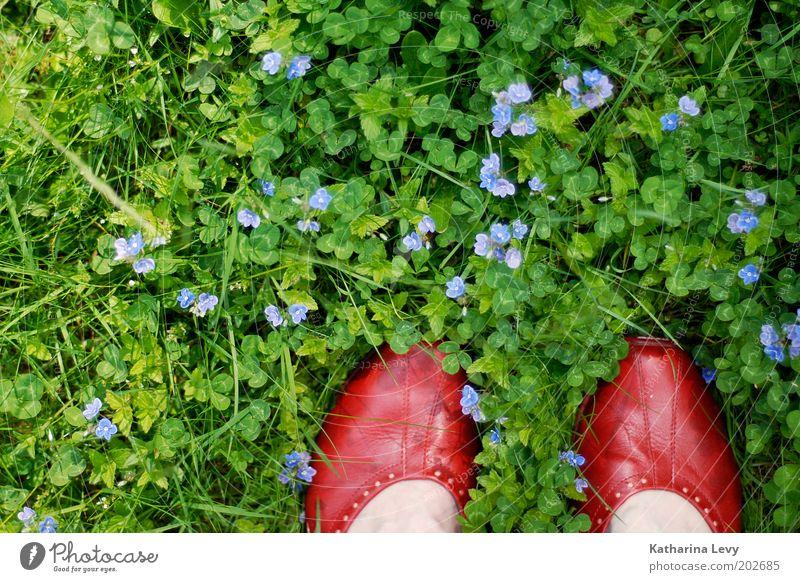David Bowie Mensch Leben Fuß 1 Umwelt Natur Frühling Sommer Blume Gras Garten Park Wiese Schuhe stehen authentisch grün violett rot Zufriedenheit