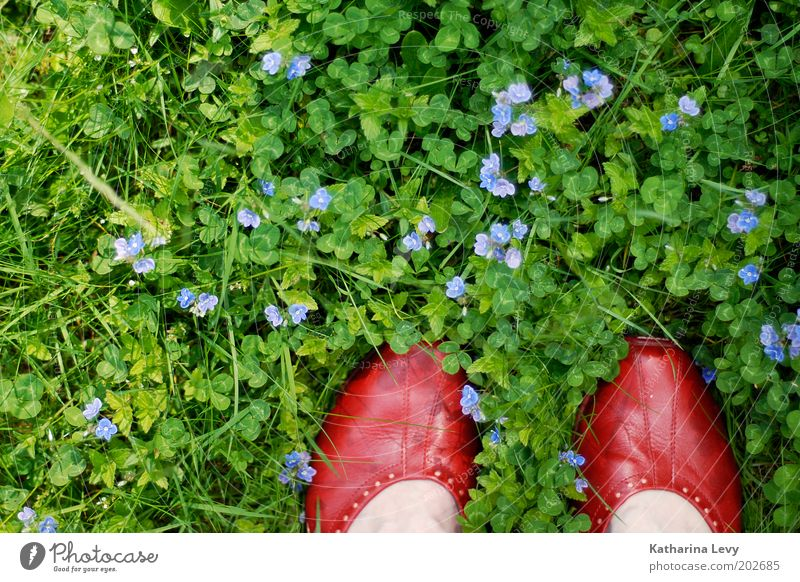 David Bowie Mensch Natur Blume grün rot Sommer Leben Wiese Gras Frühling Garten Fuß Park Schuhe Zufriedenheit Umwelt