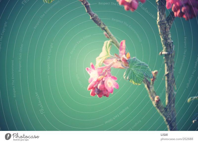 wide eyes Natur weiß Blume grün Pflanze Blatt Blüte Gras Frühling grau Wärme braun rosa Umwelt frisch ästhetisch