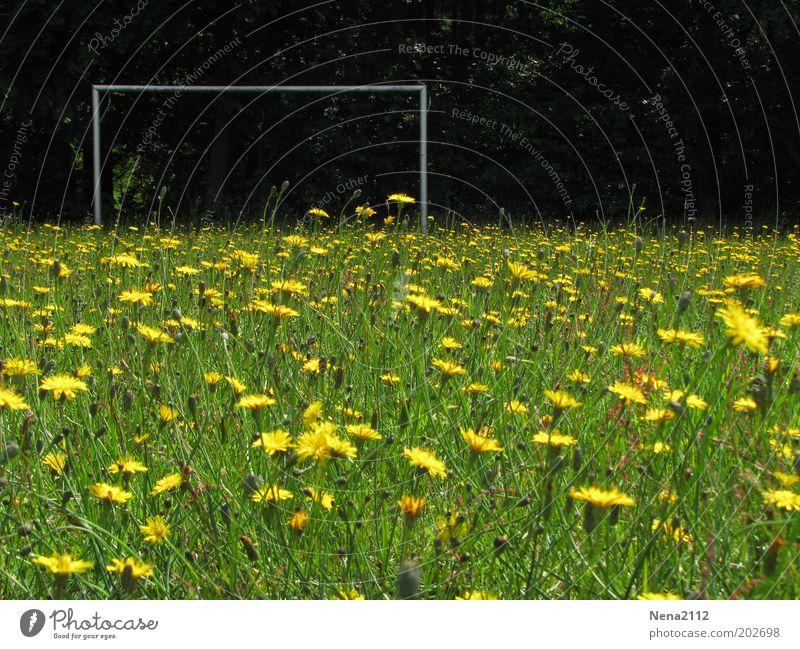 Mannschaft gesucht... Sommer Fußball Fußballplatz Natur Frühling Blume Gras Blüte Wildpflanze Wiese Blühend gelb grün Tor Fußballtor Blumenwiese Löwenzahn