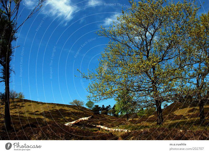 before fjord Ferien & Urlaub & Reisen Ausflug Ferne Umwelt Natur Landschaft Himmel Wolken Frühling Schönes Wetter Baum Gras Sträucher Moos Grünpflanze Fjord