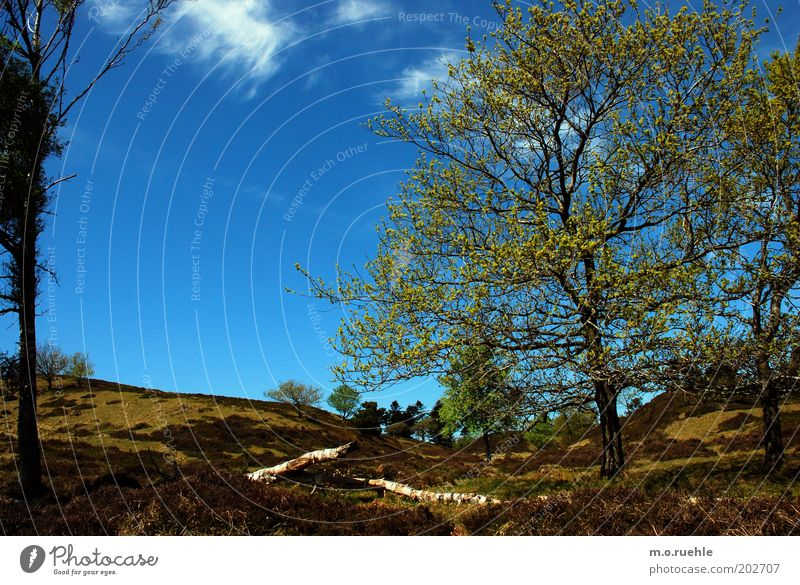 before fjord Natur Himmel Baum grün blau Ferien & Urlaub & Reisen Wolken Ferne Gras Frühling Landschaft Umwelt Ausflug Sträucher wild