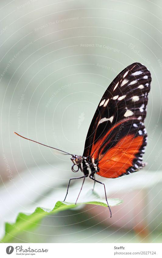 smooth Natur schön grün Blatt Tier ruhig schwarz Beine orange Textfreiraum elegant Idylle Flügel Romantik zart Schmetterling