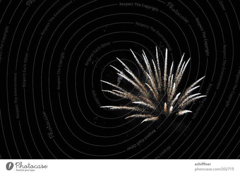 Nachtblume Nachtleben Silvester u. Neujahr glänzend Feste & Feiern Jubiläum explodieren Blume Feuerwerk Hintergrund neutral Himmel