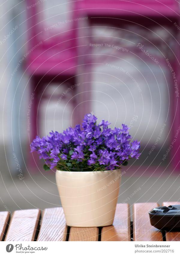 Lila Pause (AST HH 5/10) Blume rosa Tisch geschlossen Bank violett Gastronomie Restaurant Café Sitzgelegenheit Blumentopf Aschenbecher Möbel mehrfarbig Straßencafé