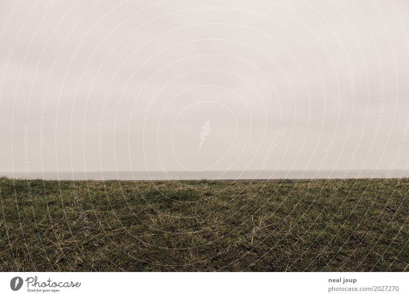 Klare Kante Natur Landschaft Himmel Herbst Winter Gras Nordsee Friedrichskoog Deich laufen Blick wandern dunkel Unendlichkeit kalt trist grau Hoffnung