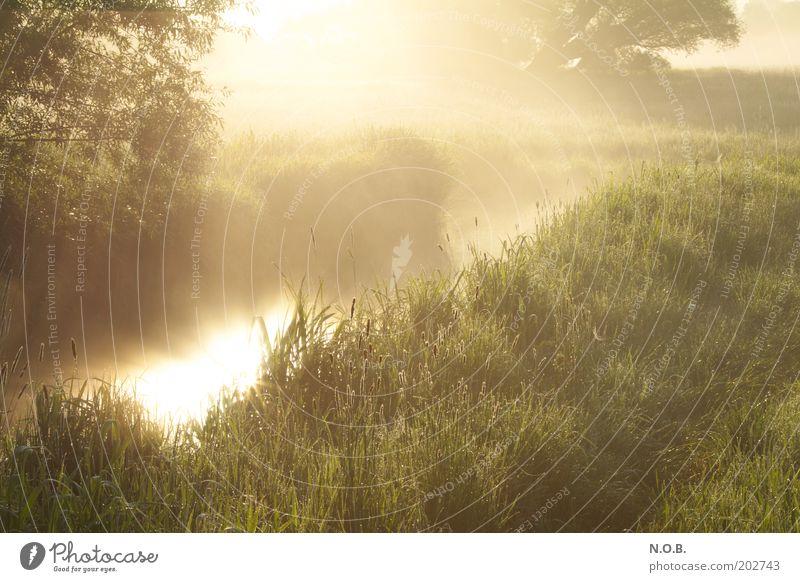 Feenglanz Natur Wasser Sonne grün gelb Wiese Gefühle Frühling Glück träumen Landschaft Stimmung glänzend gold ästhetisch fantastisch