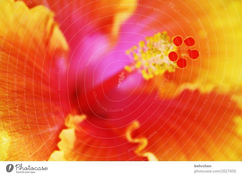 bang boom bang Natur Pflanze schön Blume Blatt gelb Blüte außergewöhnlich Garten orange Park leuchten Wachstum frisch Blühend Duft