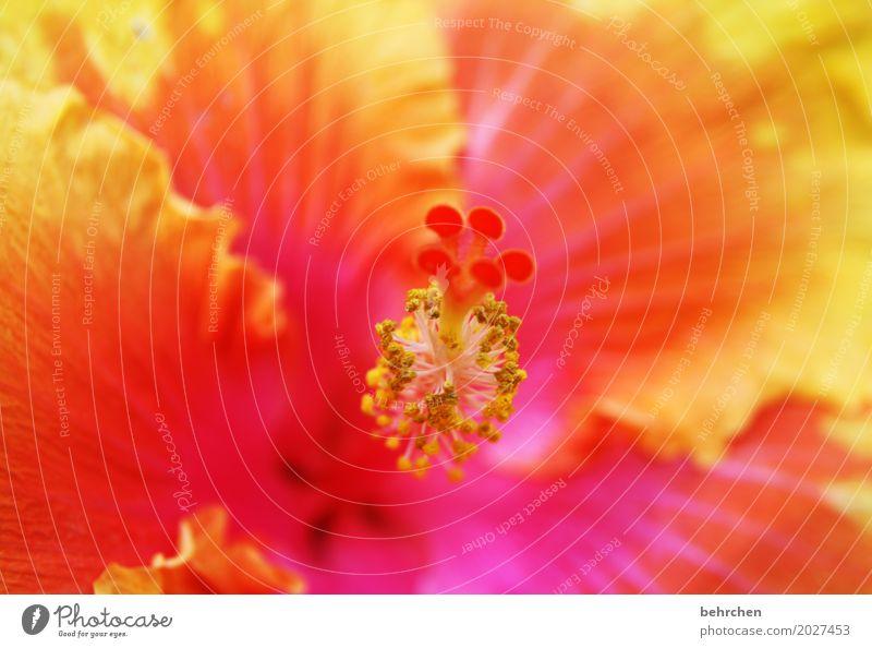 yeah...montag! Natur Ferien & Urlaub & Reisen Pflanze Sommer schön Blume Blatt Ferne gelb Blüte außergewöhnlich Freiheit Tourismus orange Ausflug leuchten