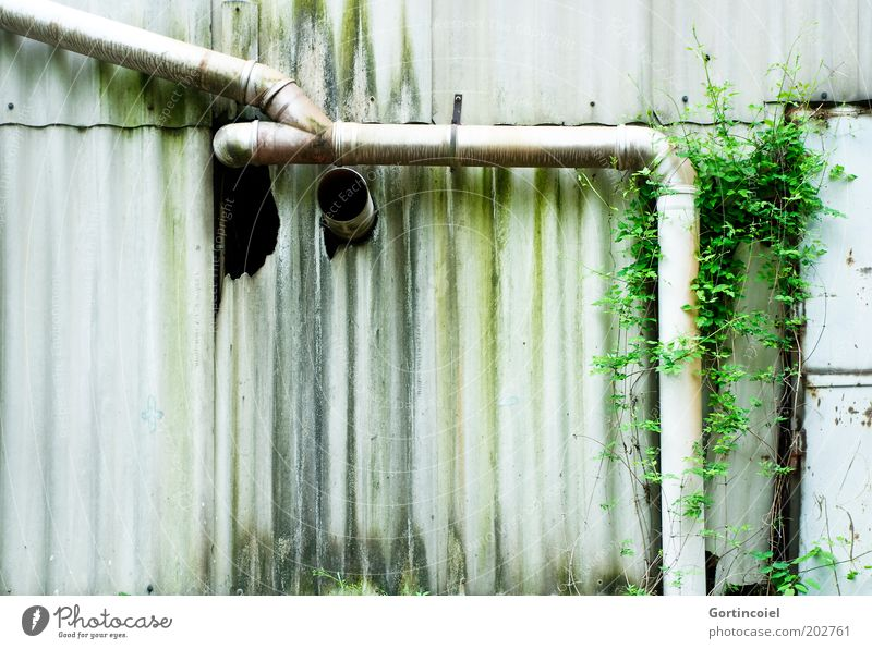 Mensch vs. Natur Industrie Pflanze Grünpflanze Industrieanlage Ruine Gebäude Fassade alt dreckig grün verfallen Rohrleitung Röhren Moos Fabrik Kletterpflanzen