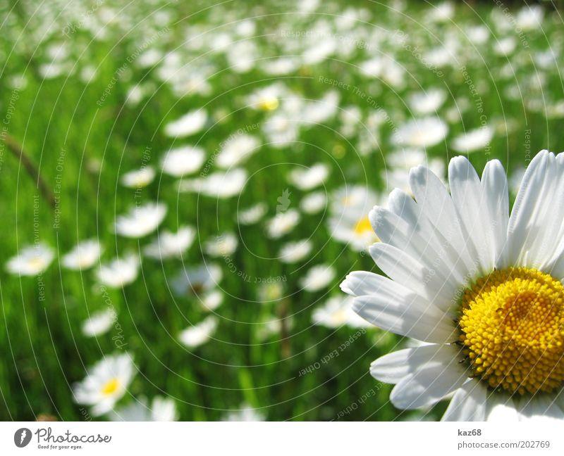 endlich Sommer Glück Ferien & Urlaub & Reisen Ausflug Freiheit Sommerurlaub Sonne Landschaft Pflanze Frühling Schönes Wetter Blume Park Wiese Duft Erholung