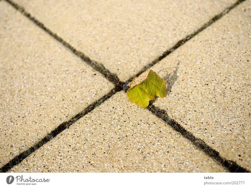 zurückerobern Umwelt Natur Blatt Wegkreuzung Stein Linie stehen klein Einsamkeit Beginn Hoffnung Mittelpunkt Wandel & Veränderung kreuzen Fuge Farbfoto