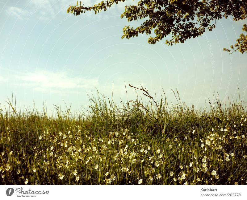 sommerwiese 2.0 harmonisch Wohlgefühl Erholung ruhig Freiheit Sommer Umwelt Natur Landschaft Himmel Sonnenlicht Frühling Baum Gras Wildpflanze Wiese Feld
