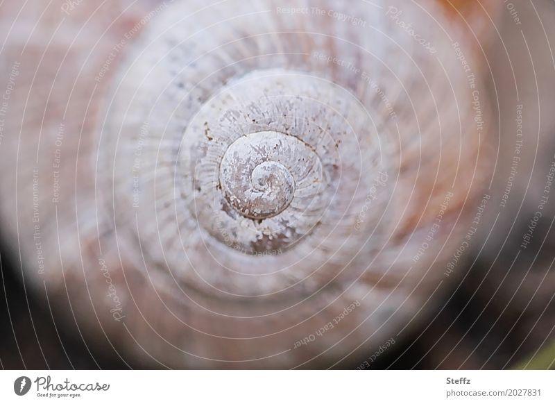 Symmetrie des Schneckenhauses Spirale Urform harmonisch Spiralform spiralförmig Struktur Form spiralenförmig Natursymmetrie Naturgeometrie Naturmuster