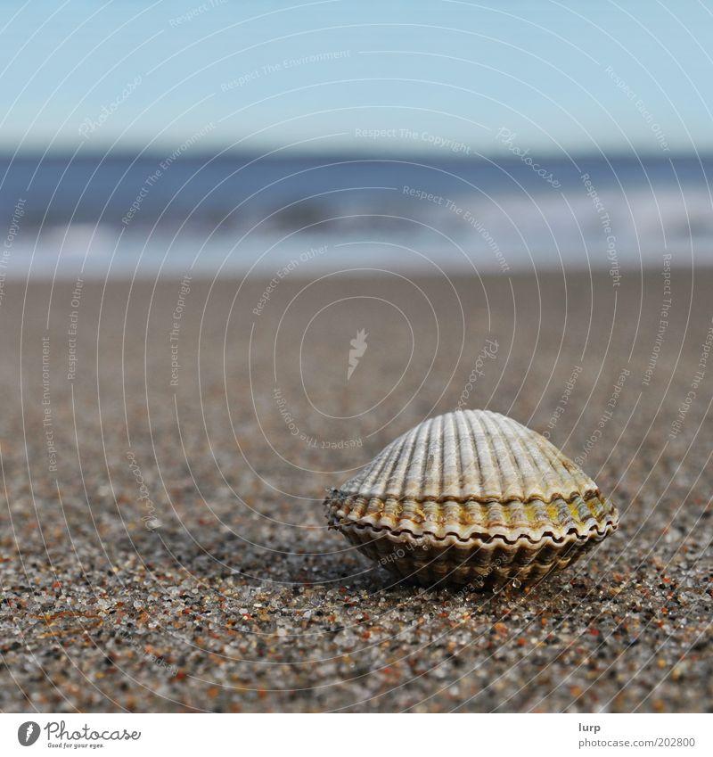 Der Sommer ist noch lang Meer blau Strand Ferien & Urlaub & Reisen Erholung Freiheit Sand braun Wellen geschlossen Insel Tourismus Ostsee Muschel Nordsee