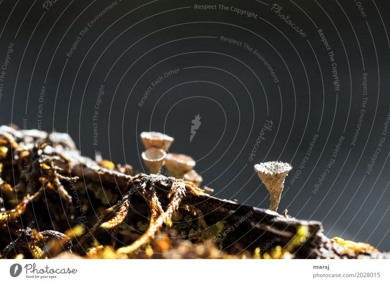 Kleine Trichter Natur Pflanze dunkel natürlich klein außergewöhnlich Zusammensein dreckig Wachstum authentisch Erfolg einzigartig dünn Verfall gruselig skurril