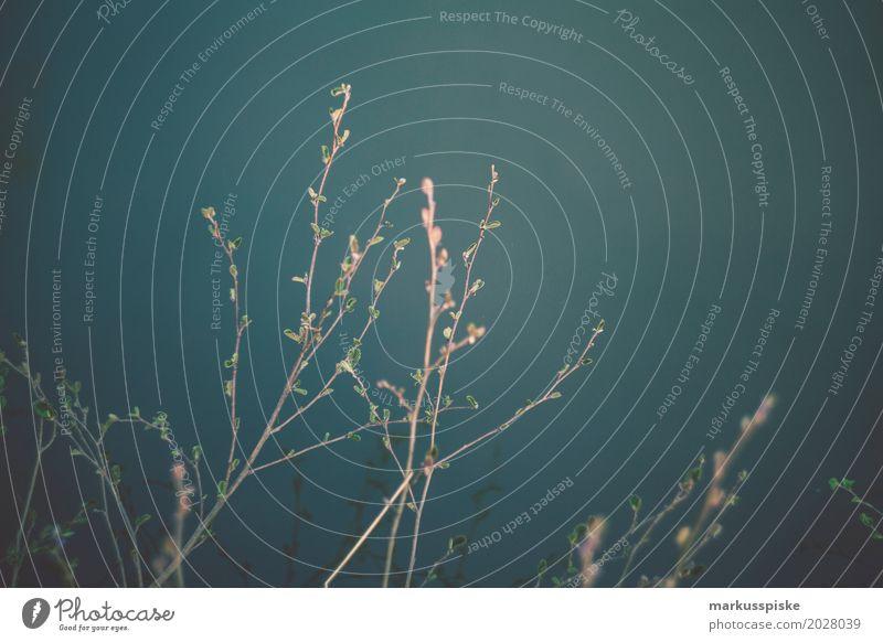 Frühling Blüte Sinnesorgane Erholung ruhig Meditation Freizeit & Hobby Abenteuer Freiheit Sommer Garten Landschaft Pflanze Tier Baum Ast Blütenknospen Park