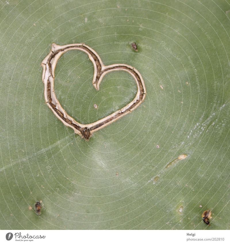verliebt... Natur alt grün Pflanze Umwelt Gefühle träumen braun Herz natürlich Design außergewöhnlich ästhetisch einzigartig Wunsch Romantik