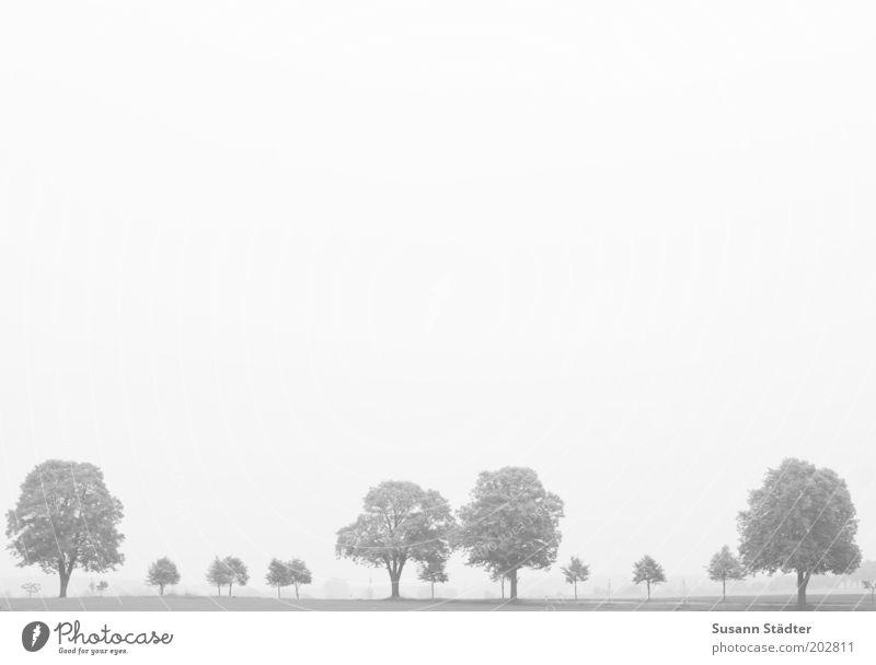 Großfamilie Himmel Baum Wiese Umwelt Feld natürlich Reihe Allee Wolkenloser Himmel Mecklenburg-Vorpommern Landleben Laubbaum