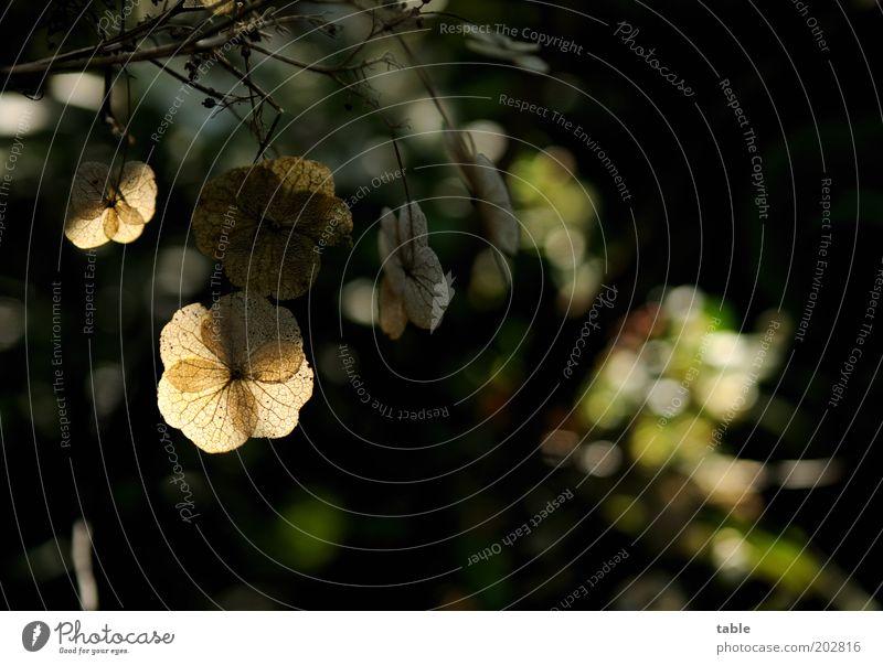 Gegenlicht Natur alt Pflanze Blatt schwarz dunkel braun Umwelt Sträucher hängen Licht verblüht Wildpflanze
