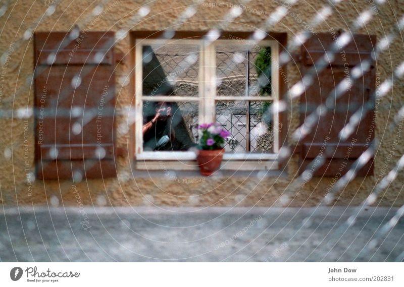 Übersehener Zaungast Blume Topfpflanze Haus Fenster braun Wachsamkeit Fensterladen Sprossenfenster Fotografieren Nachbar Netz Spiegelbild Maschendrahtzaun