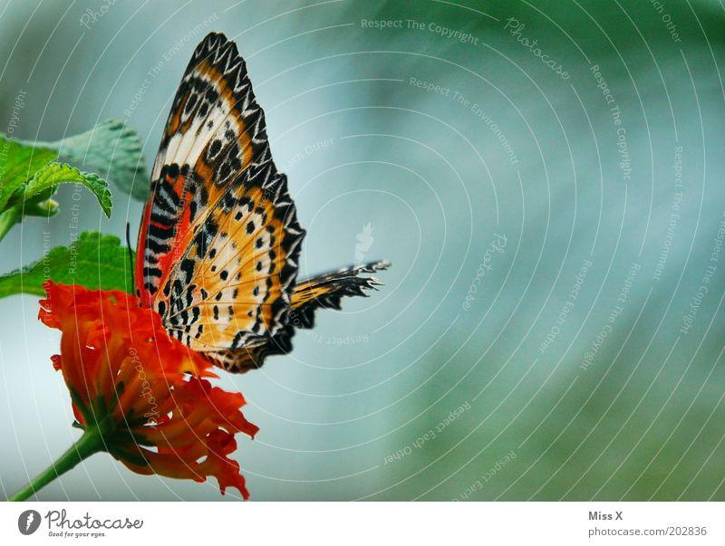 Schmetterlingsfoto Blatt Tier Flügel exotisch Insekt Pflanze
