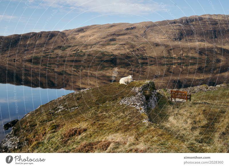 Chill Natur Landschaft Schaf 1 Tier Geborgenheit ruhig Einsamkeit Erholung Freiheit Frieden Gelassenheit Horizont Idee Idylle Kunst Langeweile Leben Pause rein