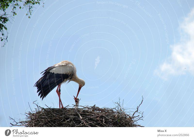 Fütterung Himmel Tier Liebe Gefühle Glück Frühling Zusammensein Vogel Tierjunges Wildtier Warmherzigkeit Vertrauen Geborgenheit Fürsorge füttern Nachkommen