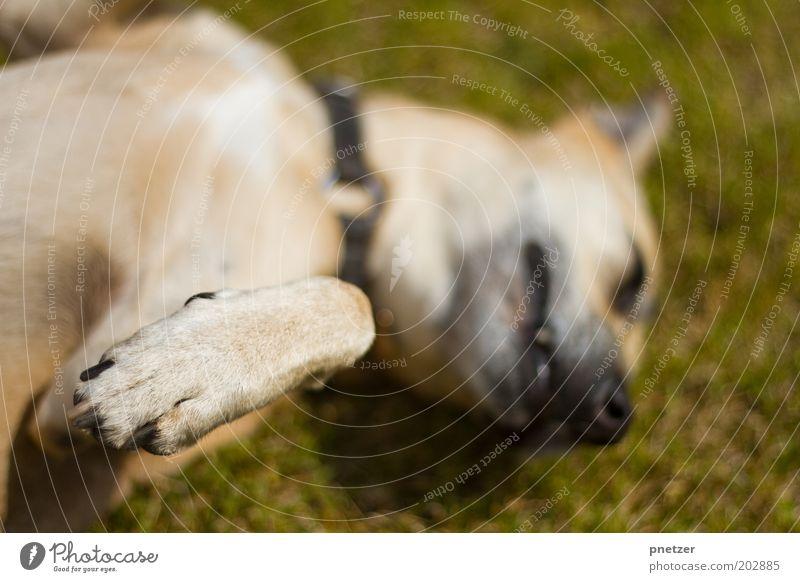 Gib Pfote! Freude Tier Erholung Spielen Glück Hund Park Zufriedenheit lustig Fröhlichkeit liegen einzigartig Lebensfreude Idylle Gelassenheit Freundlichkeit