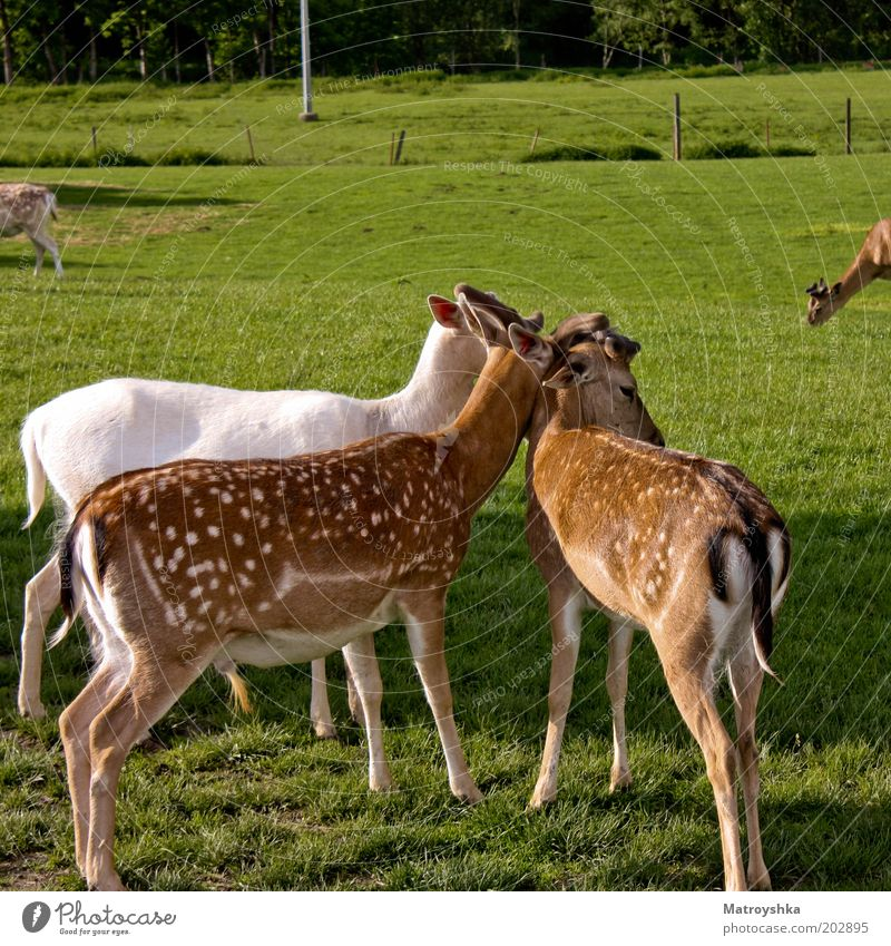 anschmiegsam Natur Sommer Tier Frühling Glück Freundschaft Feld Sicherheit Kommunizieren Tiergruppe stehen Team Punkt Zoo Partnerschaft kuschlig