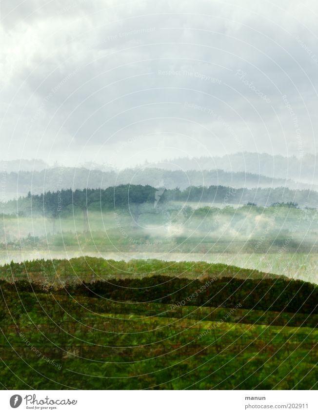 *500* Umwelt Natur Landschaft Frühling Sommer Baum Gras Sträucher Wiese Feld Wald Hügel ästhetisch außergewöhnlich Leben Umweltschutz Nebelschleier Farbfoto