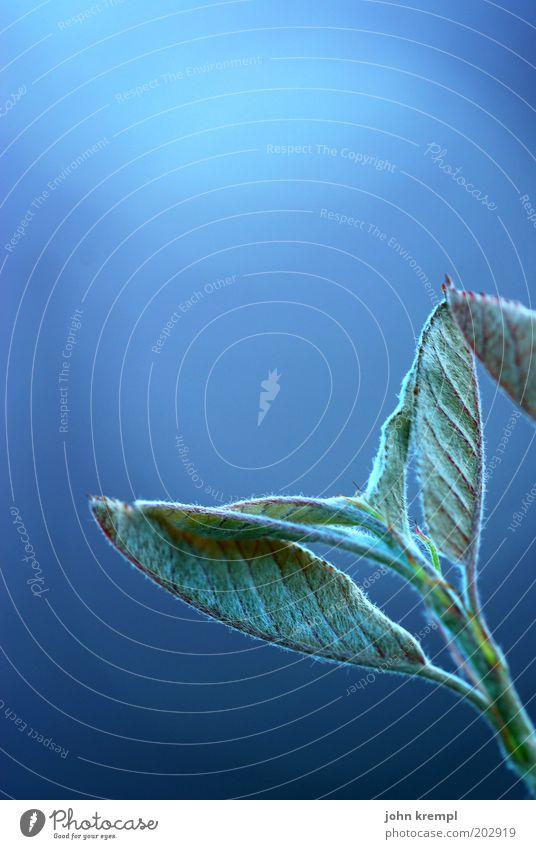 Iss mich Natur Pflanze Baum Sträucher Blatt Grünpflanze Blühend Wachstum frisch blau grün Romantik Leben Wandel & Veränderung Zukunft Photosynthese Himmel Licht