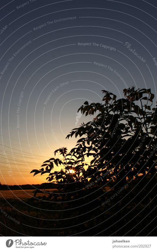 Scherenschnitt Natur Wolkenloser Himmel Sonnenaufgang Sonnenuntergang Schönes Wetter Menschenleer leuchten blau gold schwarz Romantik ruhig Idylle