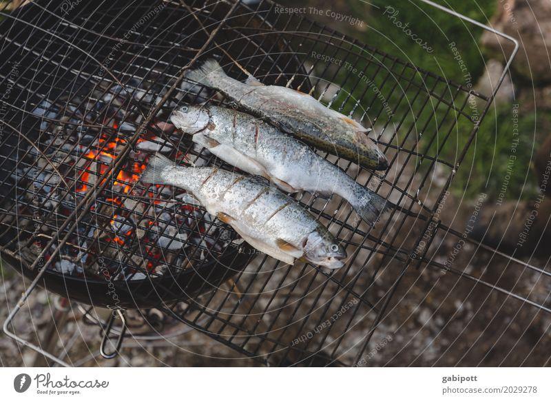 Fische grillen ist besser als Grillen fischen Lifestyle Gesunde Ernährung Freizeit & Hobby Wohnung Garten Feste & Feiern Lebensfreude Essen Abendessen Feuer