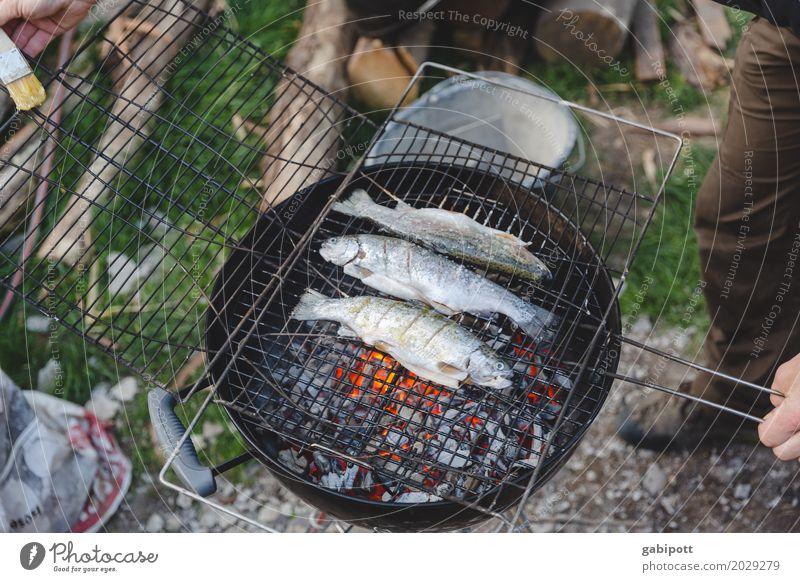 Fische grillen ist besser als Grillen fischen Sommer Gesunde Ernährung Essen Lifestyle Garten Feste & Feiern Wohnung Häusliches Leben Freizeit & Hobby Feuer gut