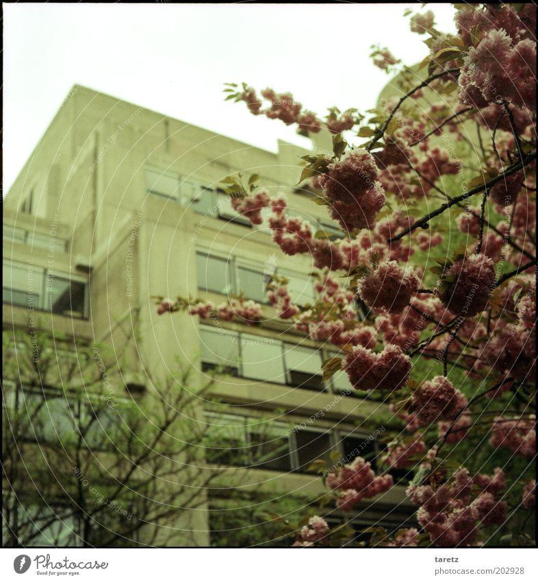 Es kommt drauf an, was man draus macht. Baum Blüte Frühling Gebäude dreckig Fassade Beton modern Studium trist bedrohlich Gegenteil eckig Sechziger Jahre Siebziger Jahre