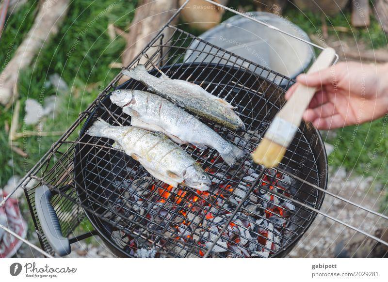 Fische grillen ist besser als Grillen fischen Lebensmittel Fleisch Kräuter & Gewürze Ernährung Essen Abendessen Gesunde Ernährung Häusliches Leben Wohnung