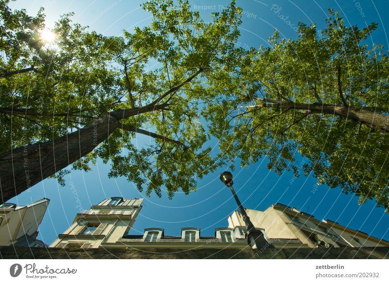 Seineufer Paris Frankreich Anlegestelle Mole Haus Fassade Vorderseite Fensterfront Sonne Sonnenstrahlen Himmel Schönes Wetter Wolkenloser Himmel Baum