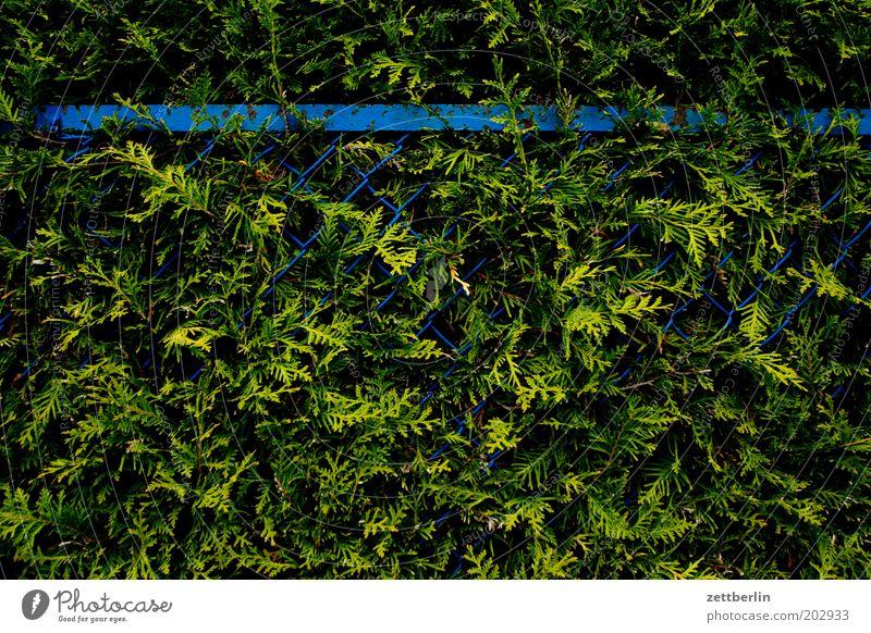 Zaun und Hecke Maschendraht Maschendrahtzaun Garten Gartenzaun Wachstum Urwald Farn Konifere Lebensbaum blau grün Barriere geschlossen