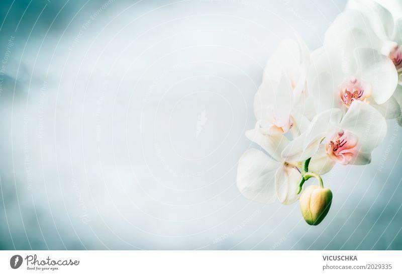 Schöne weiße Orchidee auf blauem Hintergrund elegant Design Wellness Spa Sommer Häusliches Leben Natur Pflanze Blume Blüte Dekoration & Verzierung Blumenstrauß