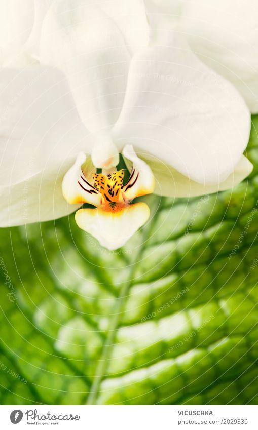 Nahaufnahme von weißer Orchidee elegant Design Wellness Spa Freizeit & Hobby Natur Pflanze Sommer Blume Blühend gelb Stil grün Blatt Zimmerpflanze Farbfoto