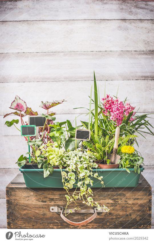 Verschiedene Pflanzen Sämlinge für Sommergarden Design Leben Freizeit & Hobby Häusliches Leben Garten Tisch Natur Blume Gras Sträucher Blatt Mauer Wand Terrasse