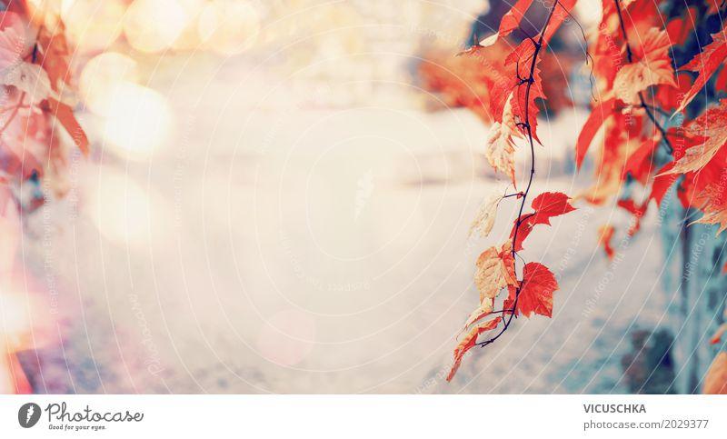 Schöne rote Blätter im Herbst Park mit Sonnenlicht und Bokeh Natur Pflanze schön Baum Blatt gelb Lifestyle Hintergrundbild Garten Design Sträucher