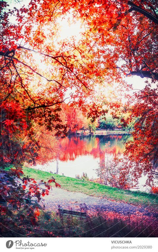 Herbst Natur mit See im Park Pflanze schön Baum Landschaft rot Blatt gelb Lifestyle Garten Deutschland Design Sträucher