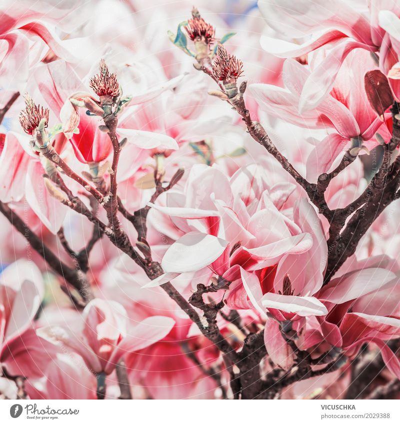 Rote Magnolienblüte auf Magnolienbaum Design Garten Natur Pflanze Frühling schlechtes Wetter Baum Blume Sträucher Blatt Blüte Park Blühend rosa