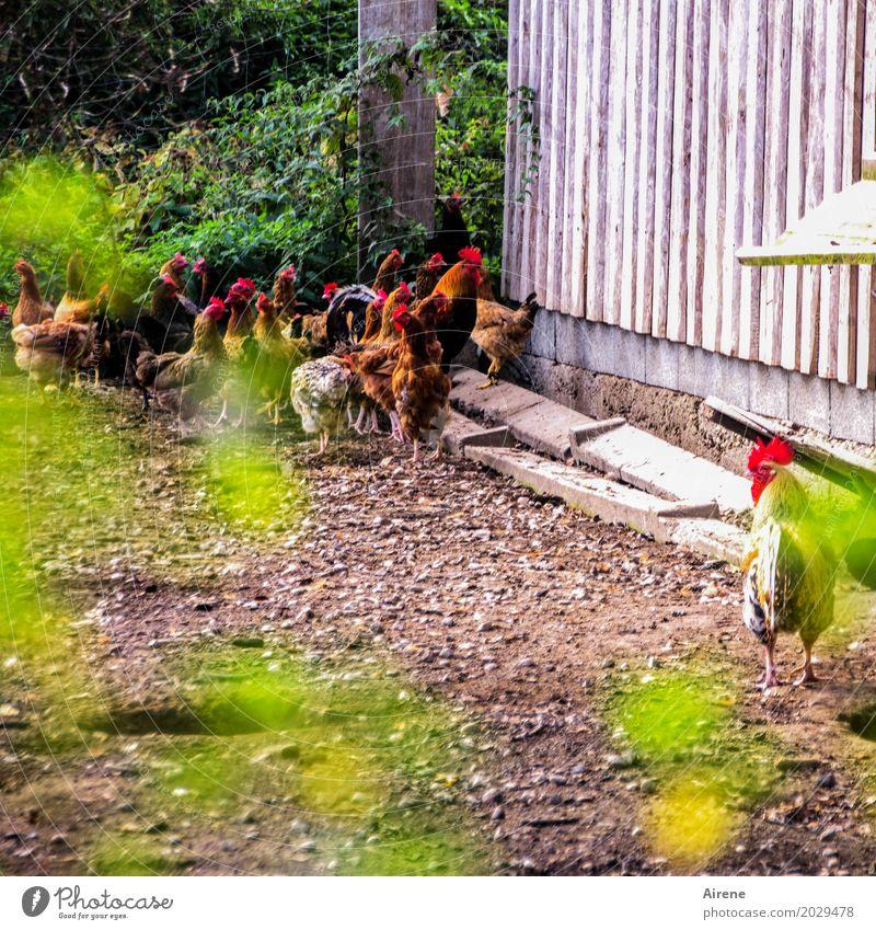 Was hat er, was ich nicht habe? Natur Einsamkeit Tier Traurigkeit natürlich Glück Vogel Zusammensein frei Idylle einzigartig Lebensfreude Tiergruppe