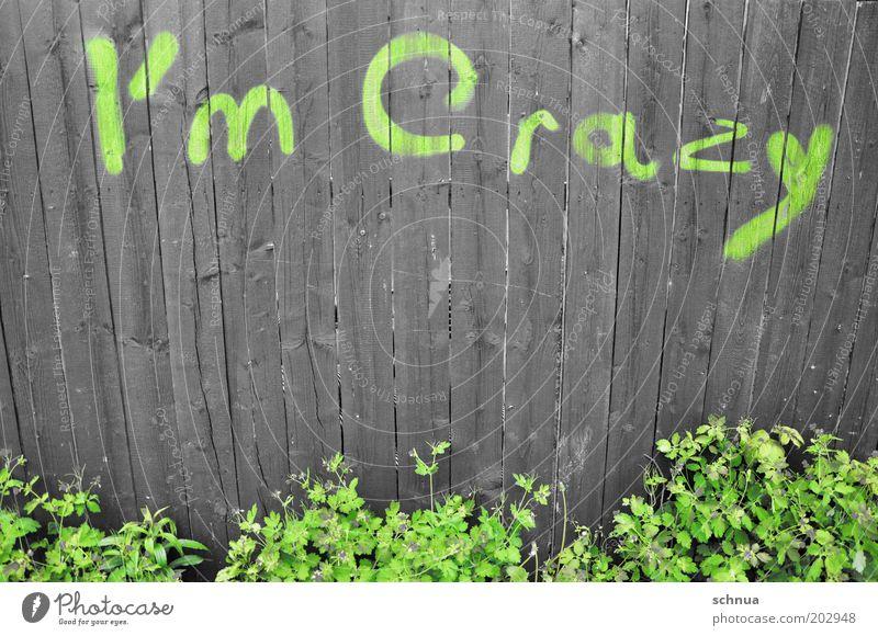 I'm crazy grün Pflanze Freude Gefühle Graffiti Holz Garten Stimmung Kunst Fassade wild Schriftzeichen verrückt außergewöhnlich Lifestyle