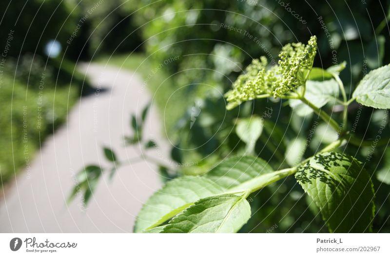 Am Rande des Weges Natur grün Pflanze Blatt Blüte Wege & Pfade Park Umwelt Klima Ast komplex Licht Wildpflanze